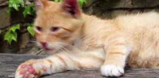 Vorschaubild zur Dokumentation über die Katzenerziehung
