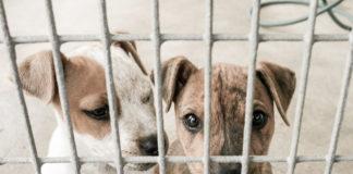Exemplarisches Bild von Tierheimhunden